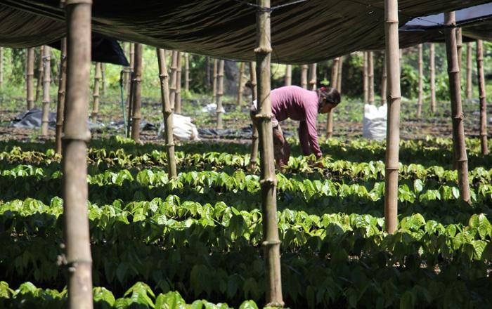 Puratos' initiative will support cocoa farmers
