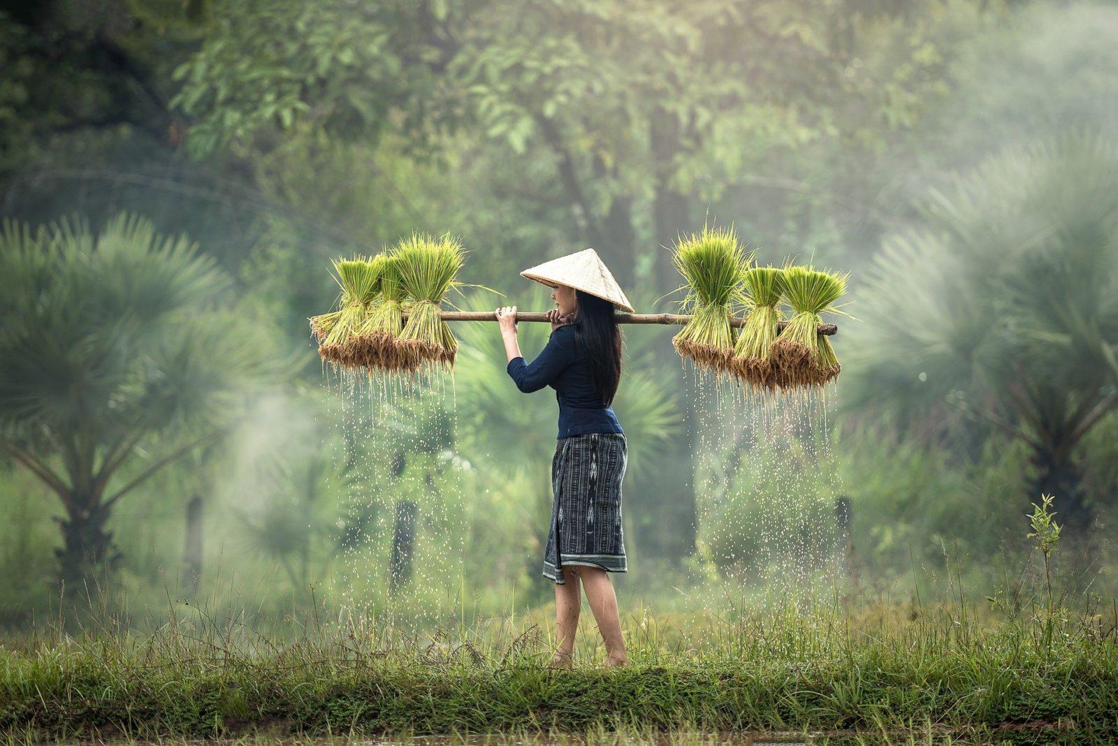 Eurostar Commodities warns a global shortage of rice flour