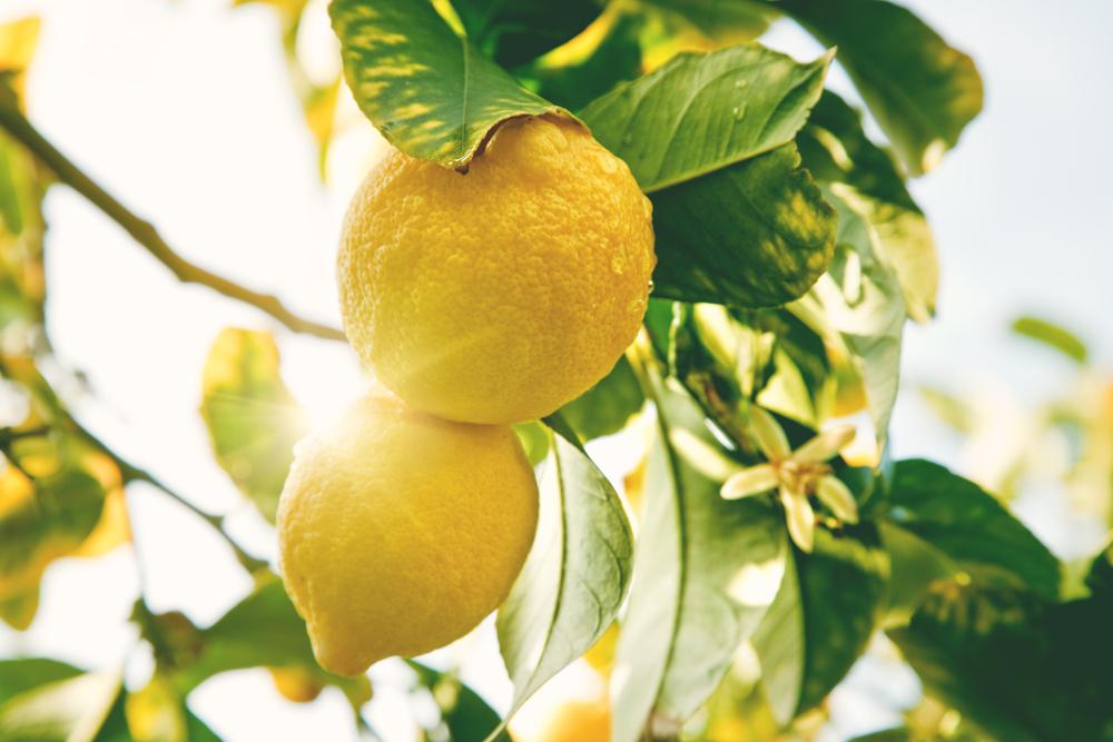 Treatt joins sustainable agriculture industry platform