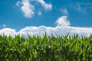 Corbion teams with Truterra to advance sustainable agriculture